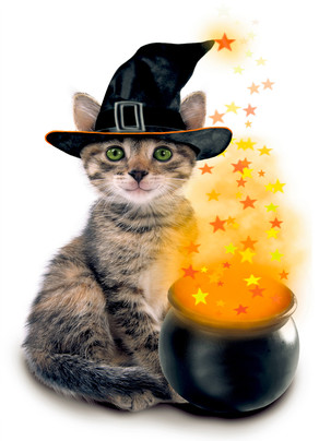 Photo Kitty with Magic Cauldron 5x7 Folded Card
