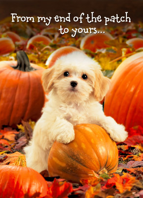 Photo Puppy in Pumpkin Patch 5x7 Folded Card