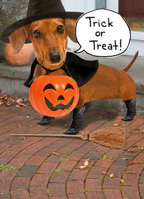 Happy Halloween Weiner Dog 5x7 Folded Card