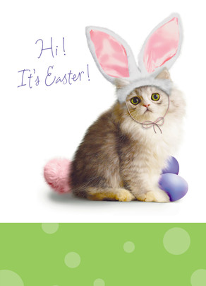 Easter Bunny Kitty 5x7 Folded Card