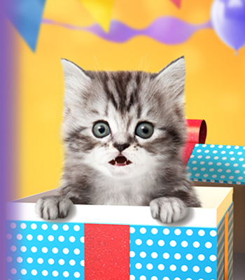 talking kitten birthday banner