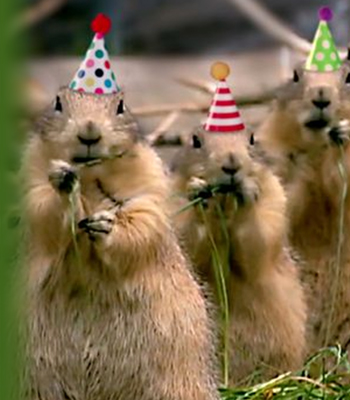 prairie dog birthday ecards